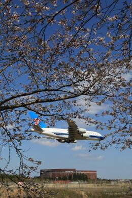 flyskyさんが、成田国際空港で撮影した中国南方航空 A380-841の航空フォト(飛行機 写真・画像)
