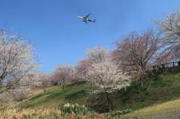 ☆ライダーさんが、成田国際空港で撮影したエアカラン A330-941の航空フォト(飛行機 写真・画像)