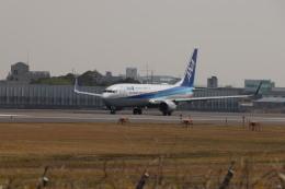 senchouさんが、伊丹空港で撮影した全日空 737-881の航空フォト(飛行機 写真・画像)