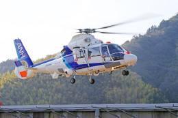 apphgさんが、静岡ヘリポートで撮影した中日本航空 AS365N2 Dauphin 2の航空フォト(飛行機 写真・画像)