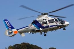 ブルーさんさんが、静岡ヘリポートで撮影したオールニッポンヘリコプター AS365N2 Dauphin 2の航空フォト(飛行機 写真・画像)