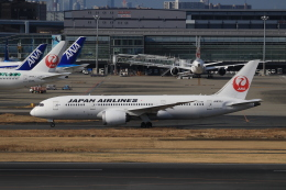 TKK744さんが、羽田空港で撮影した日本航空 787-8 Dreamlinerの航空フォト(飛行機 写真・画像)