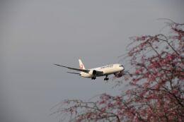 おかめさんが、成田国際空港で撮影した日本航空 787-9の航空フォト(飛行機 写真・画像)