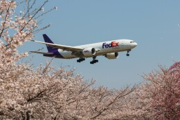 walker2000さんが、成田国際空港で撮影したフェデックス・エクスプレス 777-FS2の航空フォト(飛行機 写真・画像)