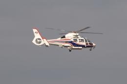 木人さんが、熊本空港で撮影した熊本県防災消防航空隊 AS365N3 Dauphin 2の航空フォト(飛行機 写真・画像)