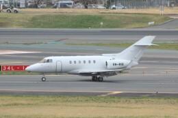 cassiopeiaさんが、成田国際空港で撮影したSELETAR JET CHARTER PTY LTD Hawker 800の航空フォト(飛行機 写真・画像)