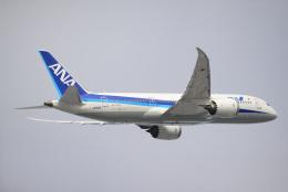 brasovさんが、羽田空港で撮影した全日空 787-8 Dreamlinerの航空フォト(飛行機 写真・画像)