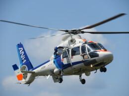 ランチパッドさんが、静岡ヘリポートで撮影したオールニッポンヘリコプター AS365N2 Dauphin 2の航空フォト(飛行機 写真・画像)