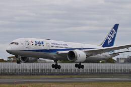 天心さんが、伊丹空港で撮影した全日空 787-8 Dreamlinerの航空フォト(飛行機 写真・画像)