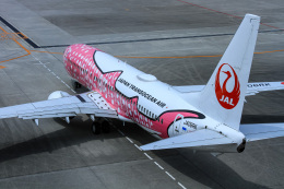 ぐっちーさんが、那覇空港で撮影した日本トランスオーシャン航空 737-8Q3の航空フォト(飛行機 写真・画像)