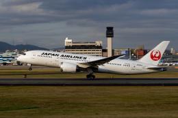 simokさんが、伊丹空港で撮影した日本航空 787-8 Dreamlinerの航空フォト(飛行機 写真・画像)