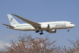 maverickさんが、成田国際空港で撮影したZIPAIR 787-8 Dreamlinerの航空フォト(飛行機 写真・画像)