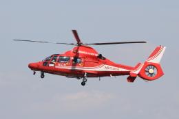 キイロイトリさんが、八尾空港で撮影した大阪市消防航空隊 AS365N3 Dauphin 2の航空フォト(飛行機 写真・画像)