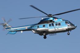 ゴンタさんが、東京ヘリポートで撮影した警視庁 AS332L1 Super Pumaの航空フォト(飛行機 写真・画像)