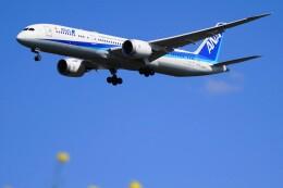 senbaさんが、成田国際空港で撮影した全日空 787-9の航空フォト(飛行機 写真・画像)