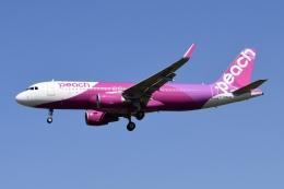 Timothyさんが、成田国際空港で撮影したピーチ A320-214の航空フォト(飛行機 写真・画像)
