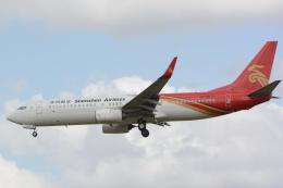 banshee02さんが、成田国際空港で撮影した深圳航空 737-87Lの航空フォト(飛行機 写真・画像)