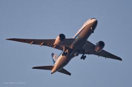 VICENTE AGEMATSUさんが、羽田空港で撮影した全日空 787-8 Dreamlinerの航空フォト(飛行機 写真・画像)
