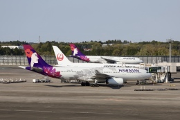m_aereo_iさんが、成田国際空港で撮影したハワイアン航空 A330-243の航空フォト(飛行機 写真・画像)