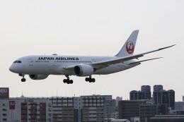 ドラパチさんが、福岡空港で撮影した日本航空 787-8 Dreamlinerの航空フォト(飛行機 写真・画像)