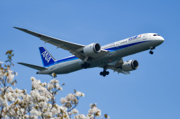 sshzeさんが、羽田空港で撮影した全日空 787-9の航空フォト(飛行機 写真・画像)