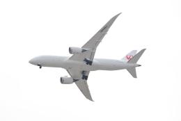 md11jbirdさんが、伊丹空港で撮影した日本航空 787-8 Dreamlinerの航空フォト(飛行機 写真・画像)