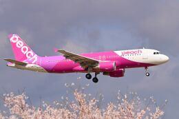 シグナス021さんが、成田国際空港で撮影したピーチ A320-214の航空フォト(飛行機 写真・画像)