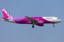 mameshibaさんが、成田国際空港で撮影したピーチ A320-214の航空フォト(飛行機 写真・画像)