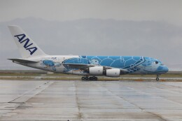 PW4090さんが、関西国際空港で撮影した全日空 A380-841の航空フォト(飛行機 写真・画像)