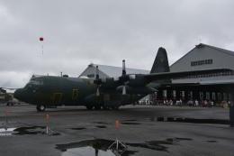 LEGACY-747さんが、千歳基地で撮影した航空自衛隊 C-130H Herculesの航空フォト(飛行機 写真・画像)