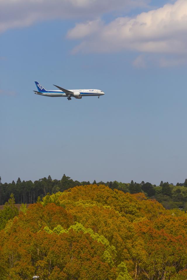mameshibaさんが、成田国際空港で撮影した全日空 787-9の航空フォト(飛行機 写真・画像)