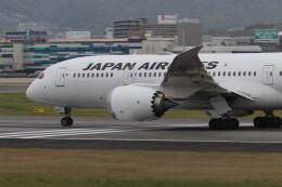 Koenig117さんが、伊丹空港で撮影した日本航空 787-8 Dreamlinerの航空フォト(飛行機 写真・画像)