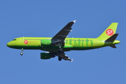 Deepさんが、成田国際空港で撮影したS7航空 A320-214の航空フォト(飛行機 写真・画像)
