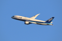 kaz787さんが、伊丹空港で撮影した全日空 787-8 Dreamlinerの航空フォト(飛行機 写真・画像)