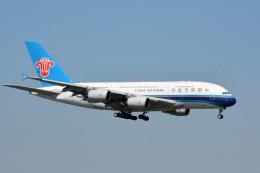 アルビレオさんが、成田国際空港で撮影した中国南方航空 A380-841の航空フォト(飛行機 写真・画像)