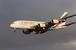 344さんが、成田国際空港で撮影したエミレーツ航空 A380-861の航空フォト(飛行機 写真・画像)