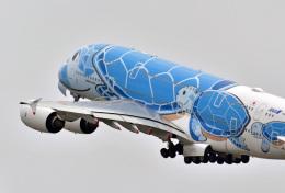 鈴鹿@風さんが、中部国際空港で撮影した全日空 A380-841の航空フォト(飛行機 写真・画像)