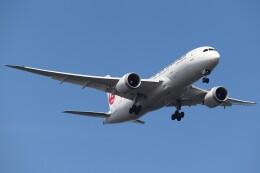 BOEING737MAX-8さんが、羽田空港で撮影した日本航空 787-8 Dreamlinerの航空フォト(飛行機 写真・画像)