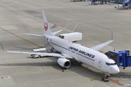 航空フォト:JA304J 日本航空 737-800