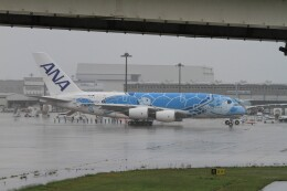 海鷹さんが、関西国際空港で撮影した全日空 A380-841の航空フォト(飛行機 写真・画像)
