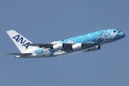 Hariboさんが、中部国際空港で撮影した全日空 A380-841の航空フォト(飛行機 写真・画像)