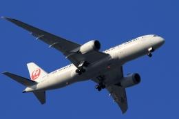 Hiro-hiroさんが、羽田空港で撮影した日本航空 787-8 Dreamlinerの航空フォト(飛行機 写真・画像)