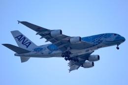 Wasawasa-isaoさんが、中部国際空港で撮影した全日空 A380-841の航空フォト(飛行機 写真・画像)