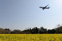 panchiさんが、成田国際空港で撮影したアトラン・アヴィアトランス・カーゴ・エアラインズ 737-86N(BCF)の航空フォト(飛行機 写真・画像)