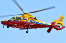 ほてるやんきーさんが、日野ヘリポートで撮影した滋賀県防災航空隊 AS365N3 Dauphin 2の航空フォト(飛行機 写真・画像)