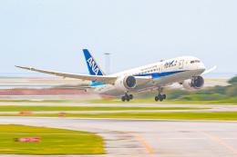 KAMIYA JASDFさんが、那覇空港で撮影した全日空 787-8 Dreamlinerの航空フォト(飛行機 写真・画像)