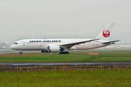 @たかひろさんが、伊丹空港で撮影した日本航空 787-8 Dreamlinerの航空フォト(飛行機 写真・画像)