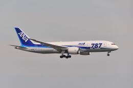 ポン太さんが、羽田空港で撮影した全日空 787-8 Dreamlinerの航空フォト(飛行機 写真・画像)