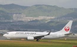 新城 JAL alpha rainbowさんが、伊丹空港で撮影した日本航空 737-846の航空フォト(飛行機 写真・画像)