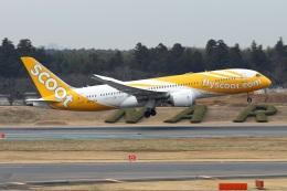 kan787allさんが、成田国際空港で撮影したスクート 787-8 Dreamlinerの航空フォト(飛行機 写真・画像)